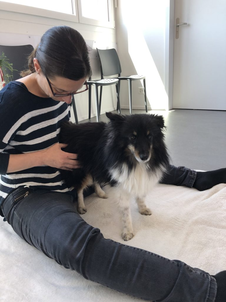 Monika Wenger Seewil Tiershiatsu Tiertherapie Hund