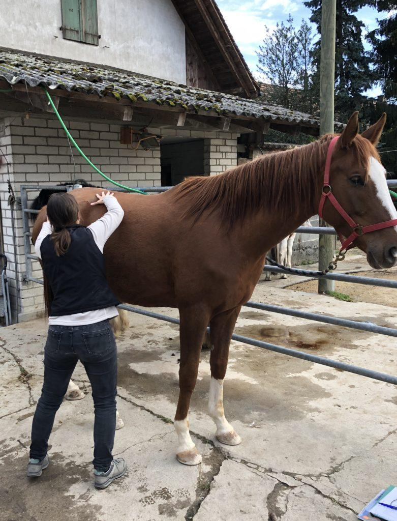 Shiatsu Pferde Seeland Bern